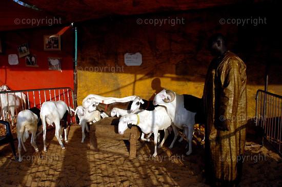 2006/11/18. Livestock farming International Fair in Dakar.