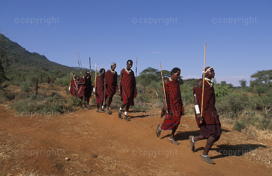 Maasai warriors approaching the manyatta for a ceremony, Tanzani