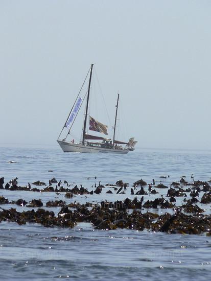 A yacht off Three Anchor Bay I